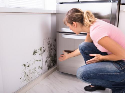 Mold Exposure Symptoms